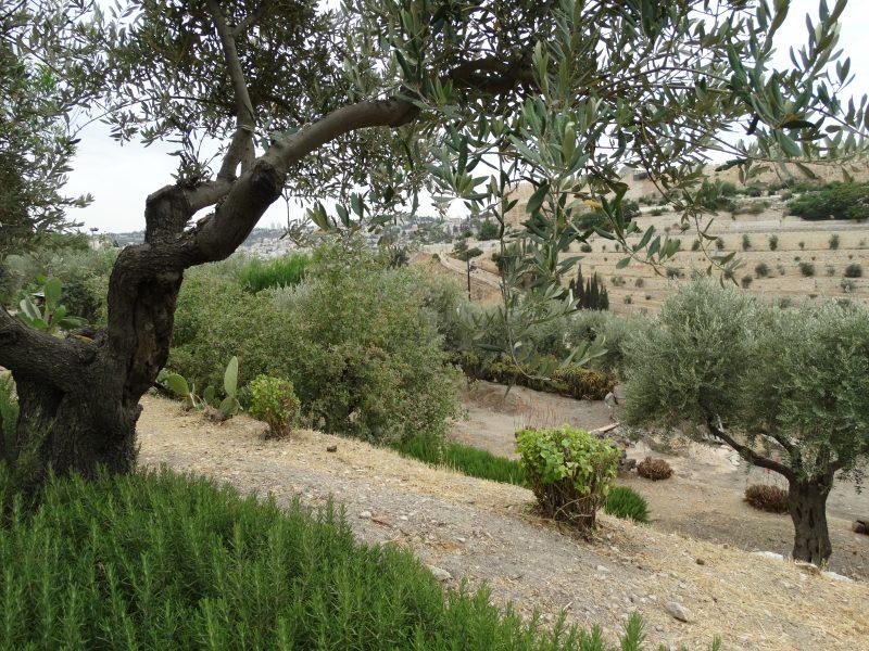 The Garden Prayer